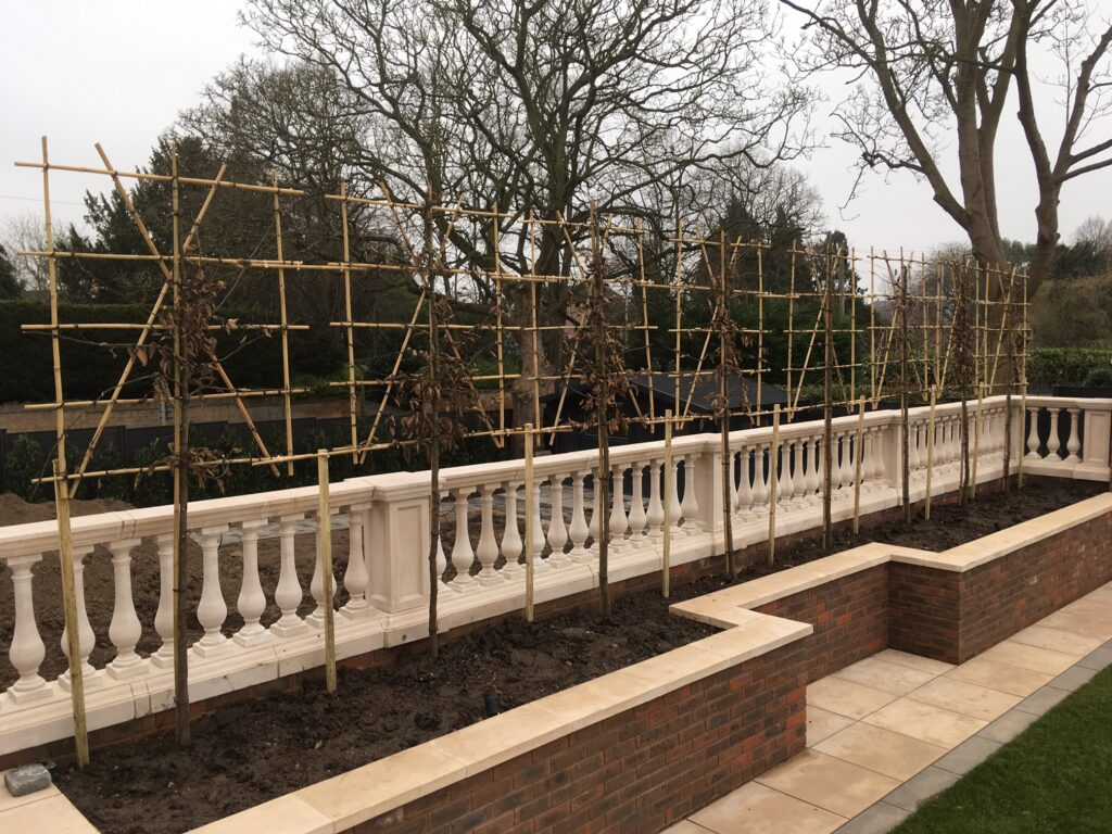 Pleached Carpinus screening